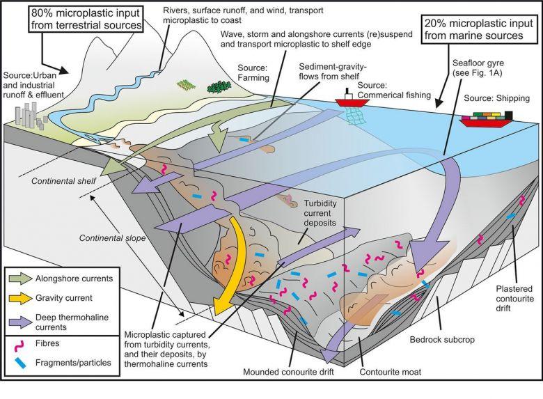 Les courants de plateau dispersent les microplastiques, de puissants écoulements par gravité rejettent les microplastiques dans les eaux profondes, tandis que les courants de fond entraînés par thermohaline séparent les microplastiques en hotspots où ils se concentrent. L'efficacité de leur stockage à long terme dépend de l'intensité de l'activité du fond et du taux d'enfouissement. / © Seafloor microplastic hotspots controlled by deep-sea circulation, Ian A. Kane1,*, Michael A. Clare, Elda Miramonte, Roy Wogelius, James J. Rothwell, Pierre Garreau, Florian Pohl / Science